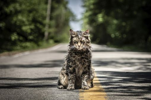 gato-church en pet sematary